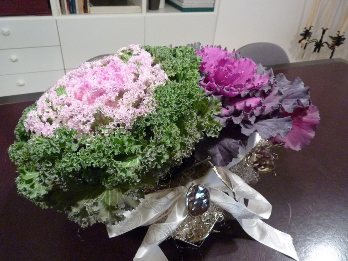 Fiore o ortaggio centro tavola arredo e convivio for Cavolo ornamentale