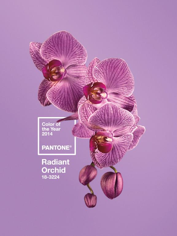 PANTONE® 18-3224 Radiant Orchid