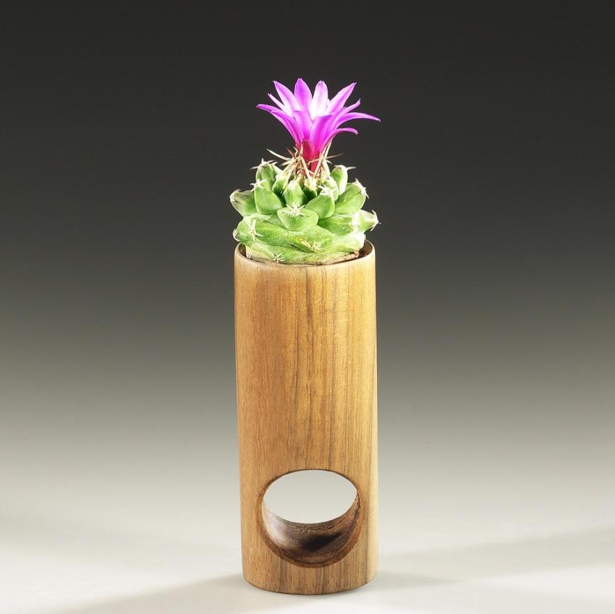 Barbara Uderzo, succulent ring, anello-scultura, 2002 legno (noce), terra, pianta grassa (turbinicarpus alonsoi fiorito) ca. mm 106x18x28, ∅ M 22 ph. l.cipullo