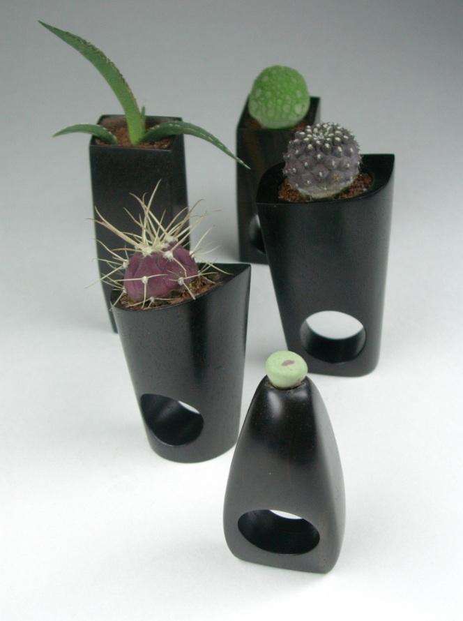 Barbara Uderzo, succulent rings, anelli-scultura, 1995-2004-2005 legno (ebano), terra, piante grasse  ph b.uderzo