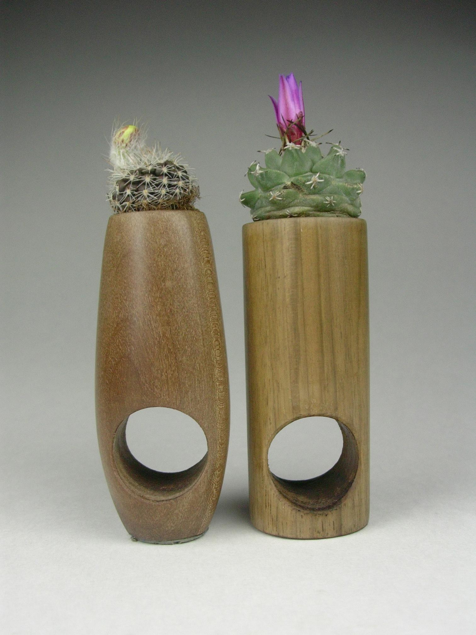 Barbara Uderzo, succulent rings, anelli-scultura,  legno, terra, piante grasse  ph b.uderzo