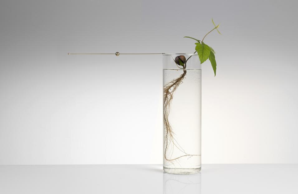 Floating Forest Michael Anastassiades