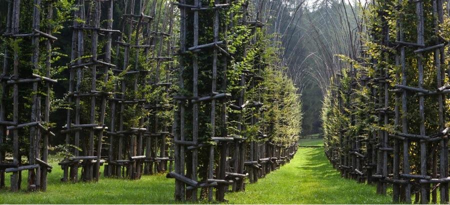 Cattedrale Vegetale Arte Sella dal sito