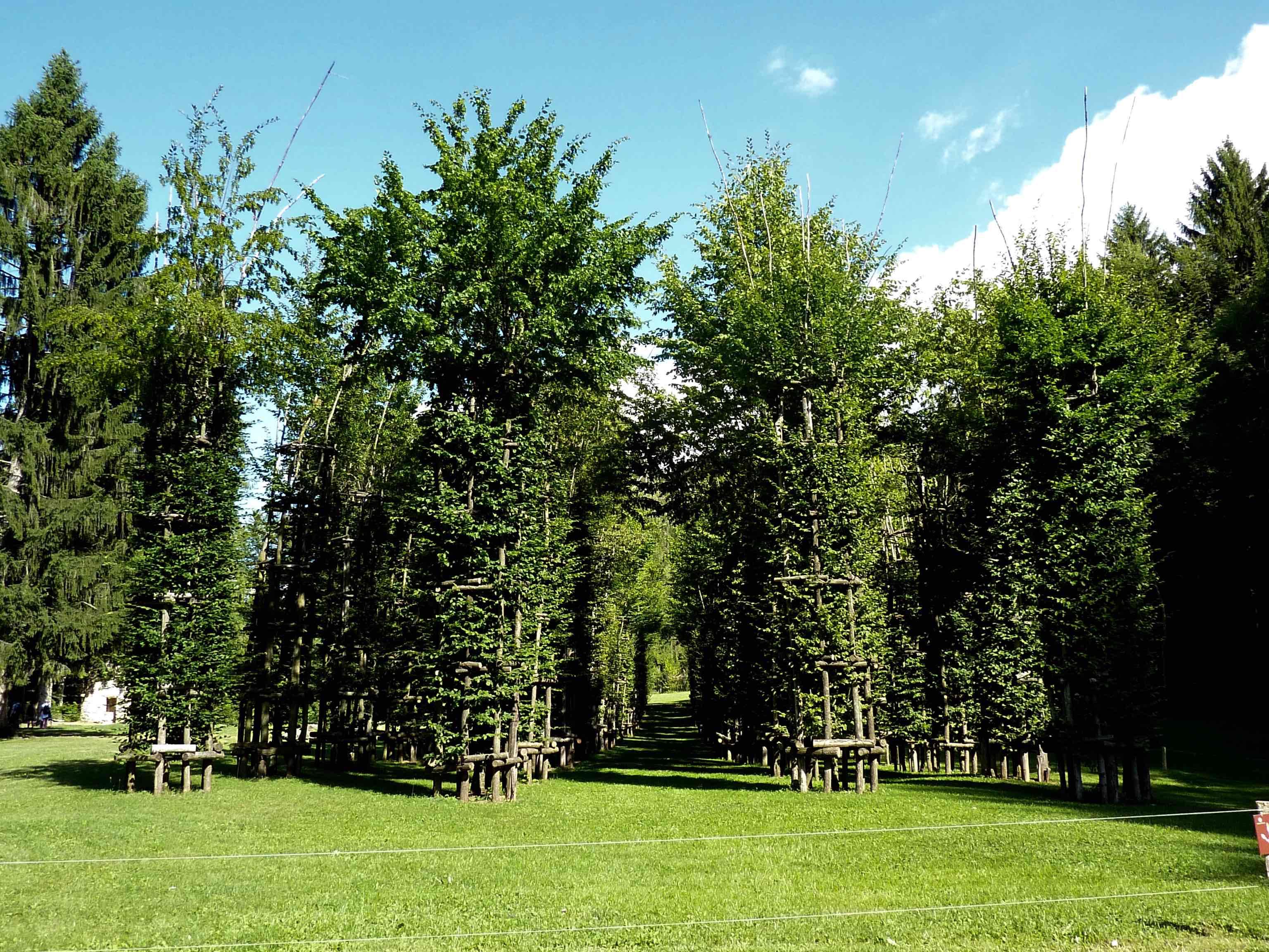 Cattedrale Vegetale Arte Sella foto MGC